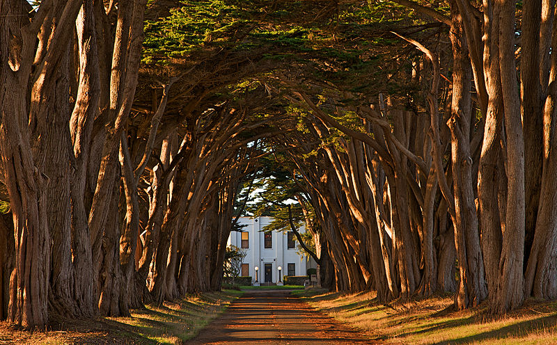 800px-cypress_tree_avenue_at_kph_point_reyes.jpg