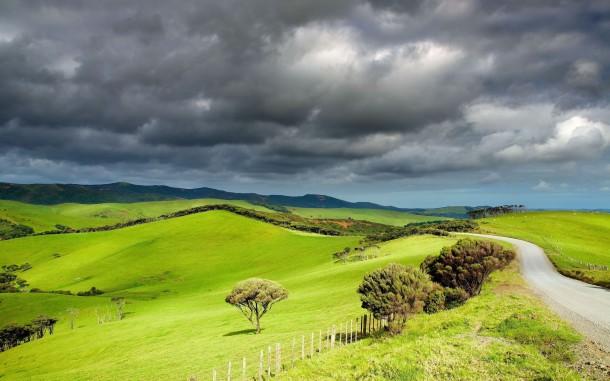 New-Zealand-Grasslands-610x381.jpg