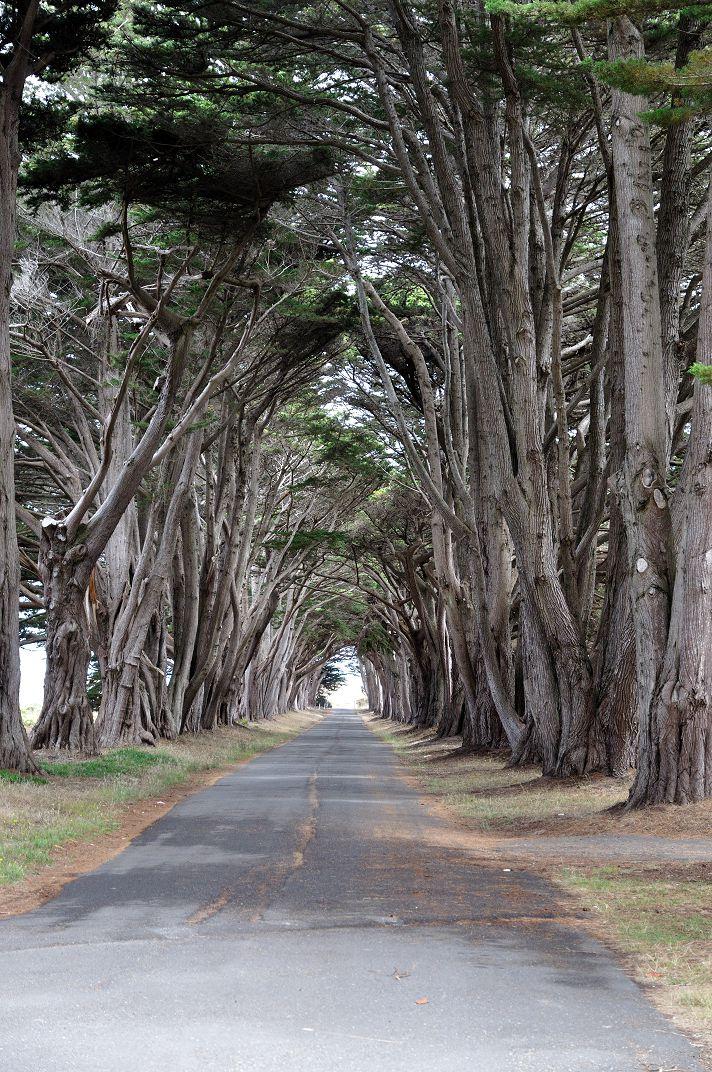 A ciprusfa alagút kicsit fakóbb verzióban