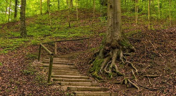 forest-2515832_640.jpg