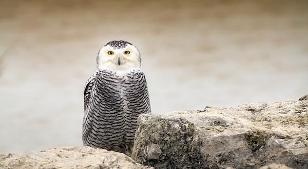 owl-1959460_640.jpg