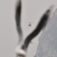 Mókustestvér az Alpokban