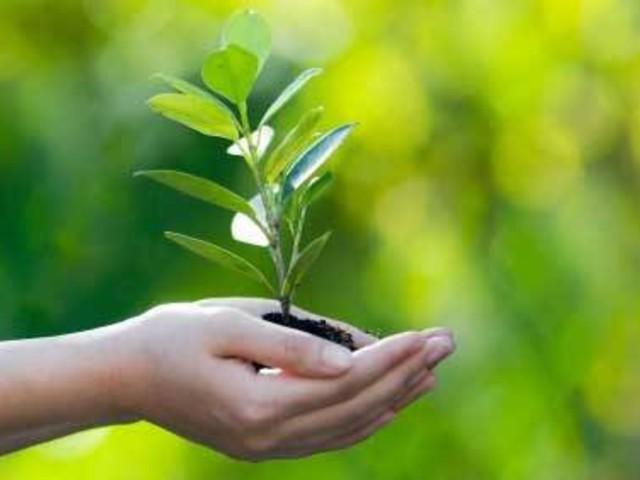 Minden születendő gyermeknek ültessünk egy fát Tatabányán is!