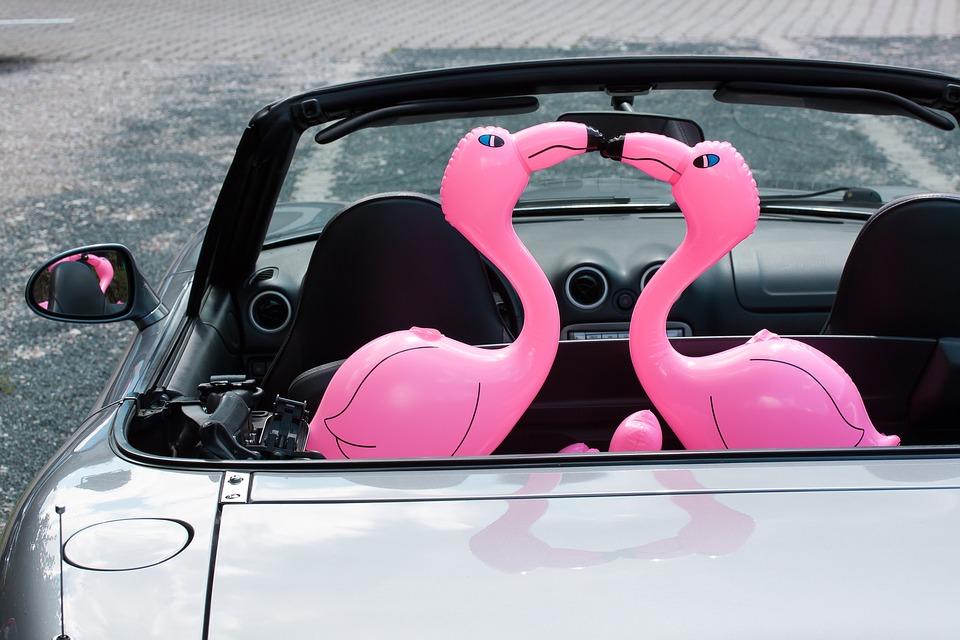 flamingo-1554218_960_720.jpg