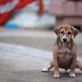 A 3 legjobb ötlet ahhoz, szobatiszta kutyusod legyen!