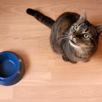 Mit ehet a macska?