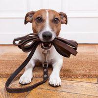 A kutyatartás top5 bajforrása