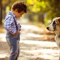 Hat ok, amiért neked is kell egy kutyus a házhoz!