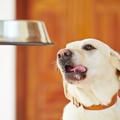 Hét dolog, amit tudnod kell a kutyák táplálkozásáról