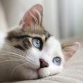Macskát a lakásba? Macskát a lakásba!