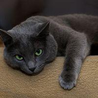 Négy dolog, amire oda kell figyelned, ha macskát tartasz