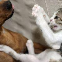 Városi legenda: Vajon létezik-e kutya-macska barátság?