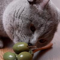 Mire vigyázzunk, mit nem ehet a macska?