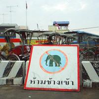 Ne zavard el az elefántot!