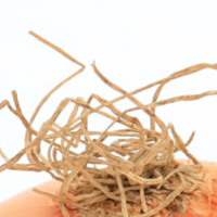 Placentiai hajhagymák