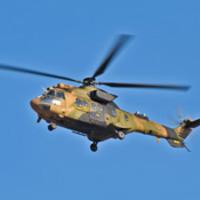 Botrovar, elefántcsontcsőrű harkály, kék hal, plusz repülőgép helikopter helyett