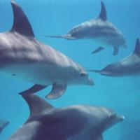 Delfinek az iskolában