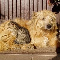 Kutyák és macskák potyognak