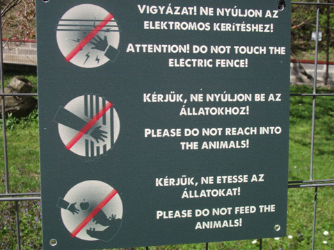 reach-into-the-animals.jpg