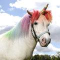 A bibliai My Little Pony