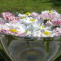 Bach –virágtanácsadás