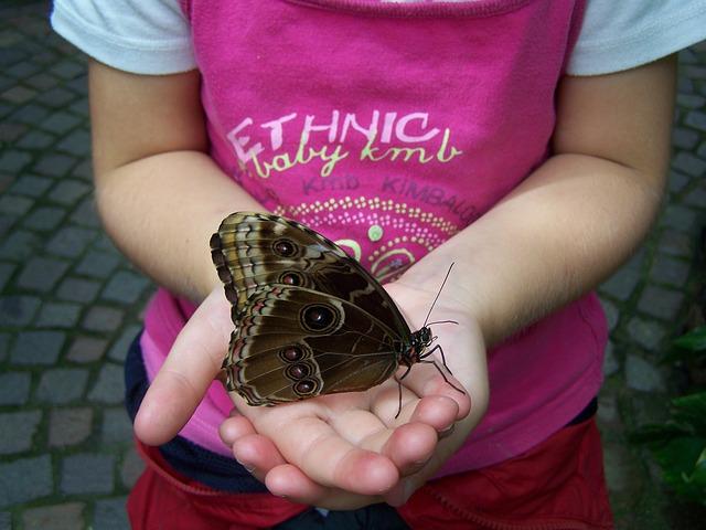 butterfly-60177_640.jpg