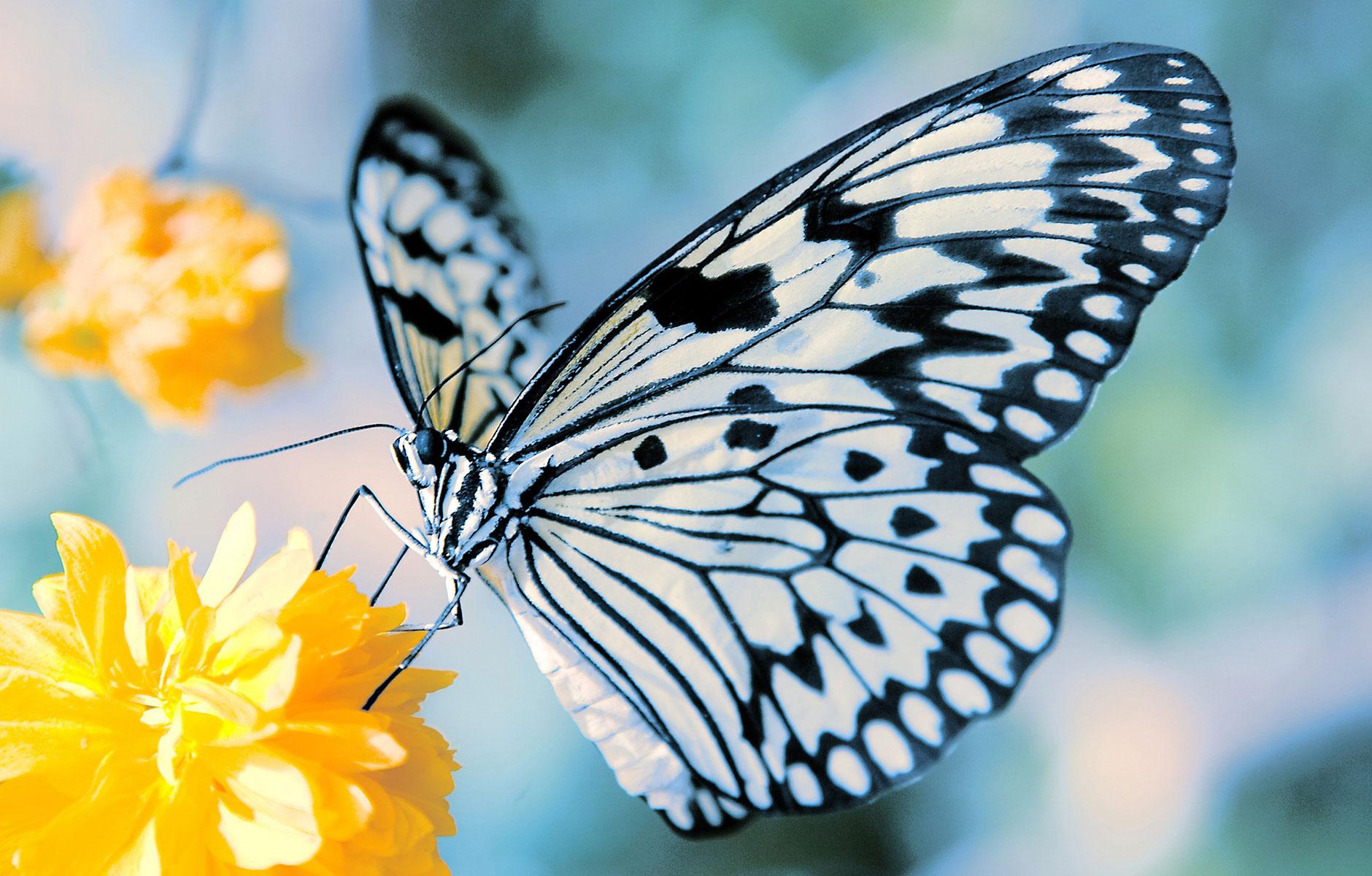 butterfly_flower-afd-18801.jpg