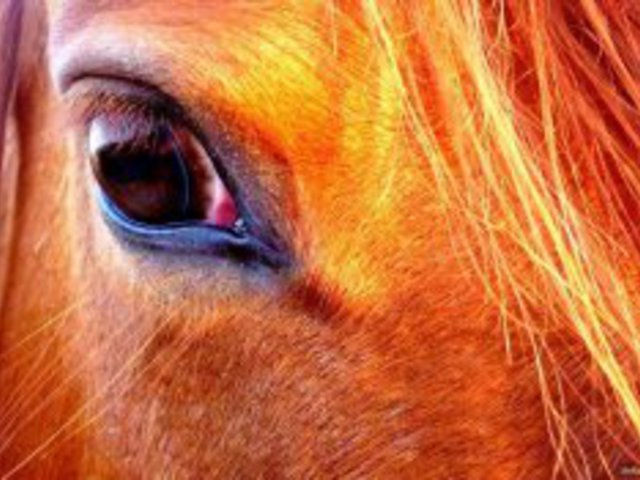 A lovak a legjobb tanítók 2. rész