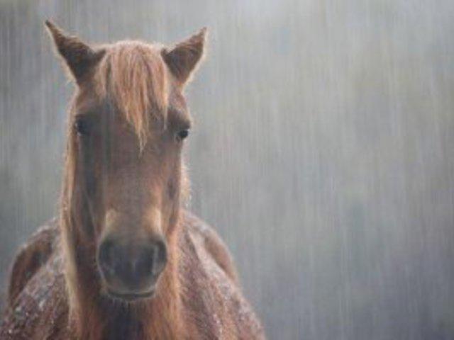 Ének az esőben... mert azért kaptuk az életet, hogy szeressük