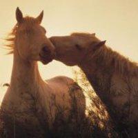 A szeretet ereje.... avagy, minden fejben dől el