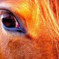 A lovak a legjobb tanítók 1.rész