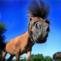 A lovaglás aranyszabályai.....