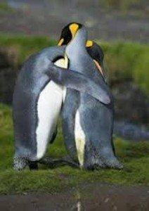 Pingvin-szeretet-212x300