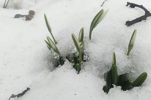 Februári időjóslás, népi bölcsességek, hiedelmek