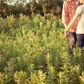 Hogyan válhat a kezdeti bosszúság párkapcsolati allergiává?