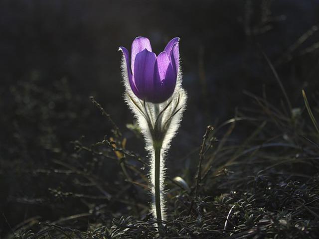 Könnyed és tavaszi