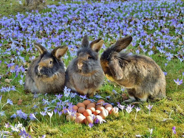 Ha már Húsvét, akkor nyúl és egyéb állatságok