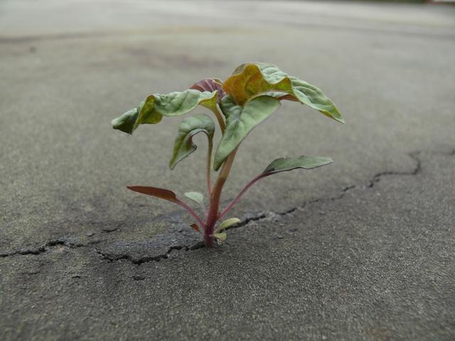 A traumákból új élet sarjad