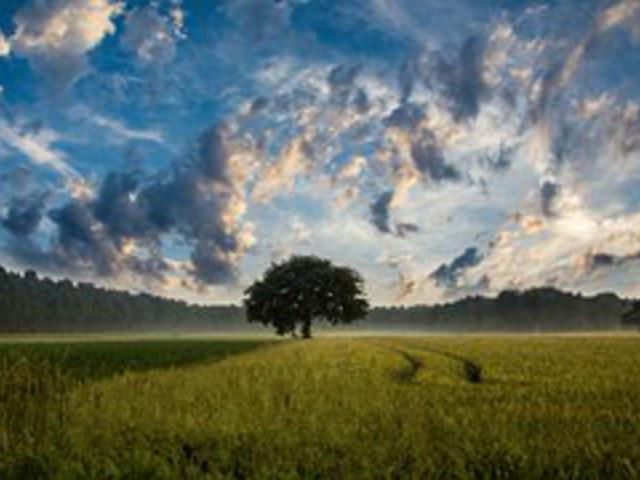 Úgy szép az élet, ha zajlik. Na de mennyire?