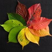 Itt van az ősz, itt van újra... szeretem, de nem az iskolakezdés miatt!