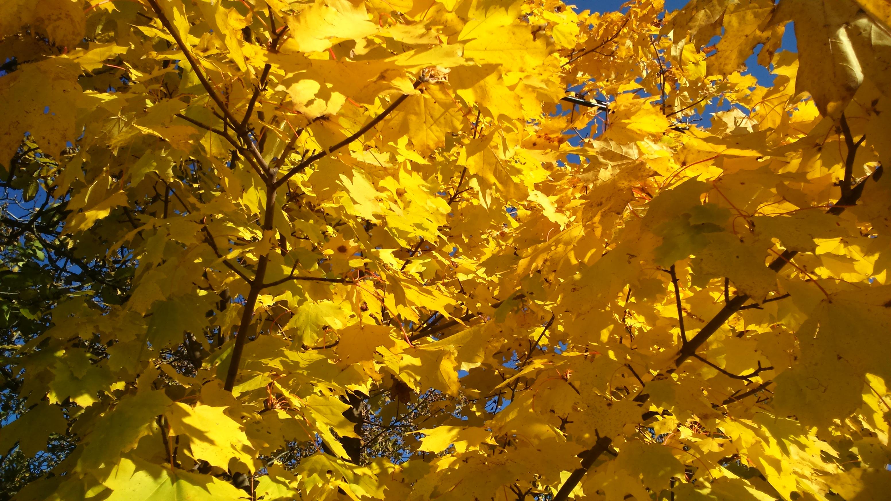 2015-10-21_15_29_31.jpg