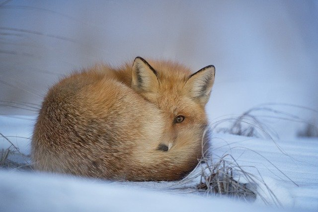animal-1850186_640.jpg