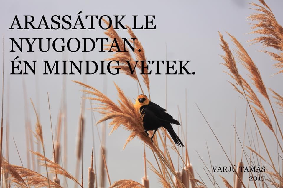 arassatok_le_nyugodtan_en_mindig_vetek.jpg