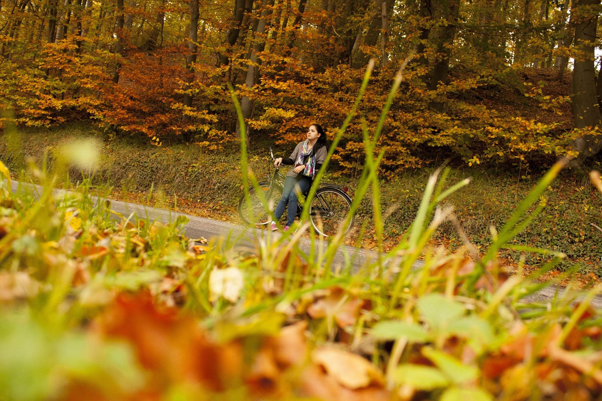 autumn-741116_1920.jpg