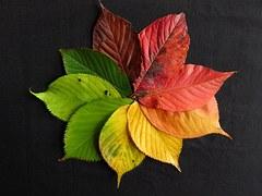 autumn-leaves-1486075_180.jpg