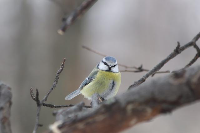 bird-3278571_640.jpg