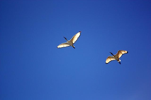 bird-350680_640.jpg