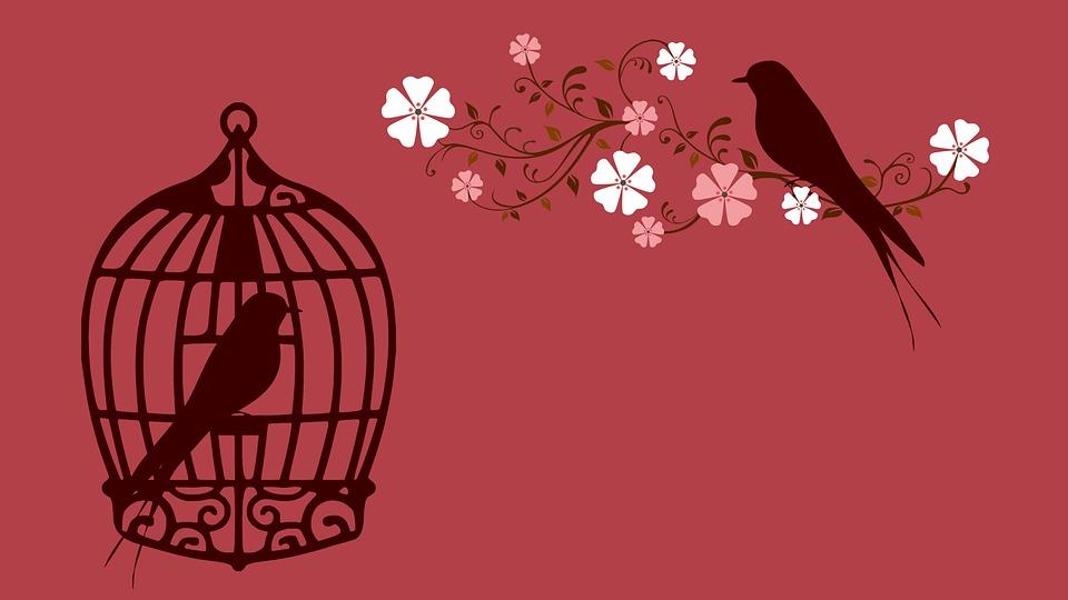 bird-855222_960_720.jpg