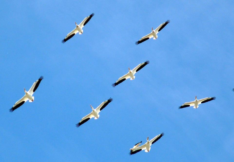 birds-112083_960_720.jpg