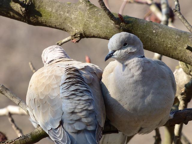 birds-706802_640.jpg